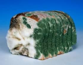 Почему плесневеет хлеб фото