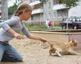 Почему ребёнок мучает животных? фото