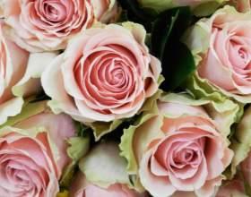 Почему розы в вазе быстро вянут фото