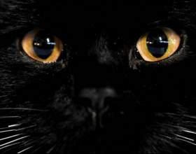 Почему у кошек светятся глаза фото