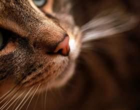 Почему у котов мокрый нос фото