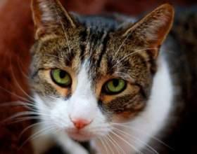 Почему взрослая кошка начала гадить на кровать фото