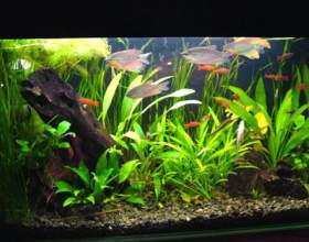Подготовка аквариума к заполнению водой фото