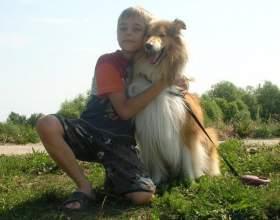 Породы собак для семьи фото