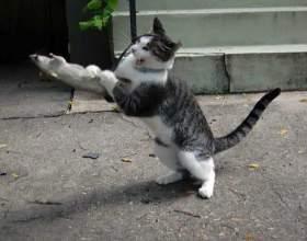 Поведение кошки и внешние факторы фото