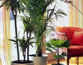 Правила полива домашних растений фото