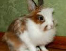 Правильный рацион для декоративного кролика фото