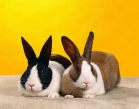 Преимущества вольерного содержания кроликов фото