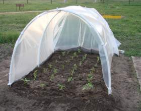 Простой способ вырастить рассаду помидоров фото