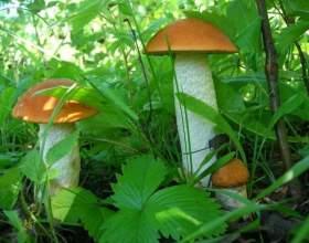 Рецепты грибных супов фото
