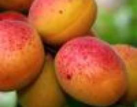 Рецепты варенья из абрикосов фото