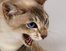 Ринотрахеит у кошек: симптомы, лечение и профилактика фото