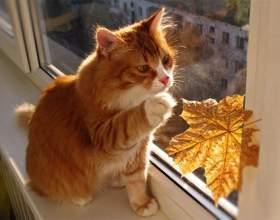 Какие самые распространенные имена кошек фото
