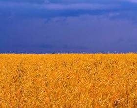 Сколько букв в украинском языке фото