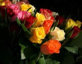 Сколько цветов лучше подарить девушке фото