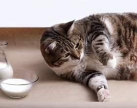 Сколько длится беременность у кошки фото