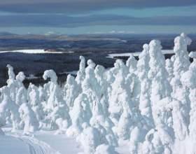 Сколько есть видов снега фото