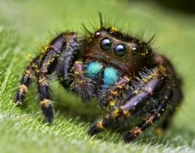 Сколько глаз у паука фото
