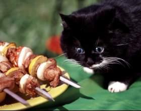 Сколько корма надо котенку фото