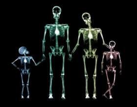 Сколько костей в теле человека фото