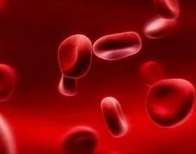 Сколько крови в человеке фото