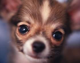 Сколько живут собаки фото