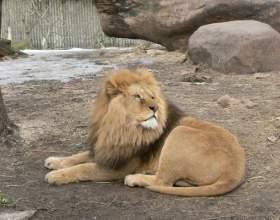 Сокращается ли жизнь животных в зоопарках фото