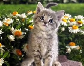 Сонник: к чему снятся котята фото