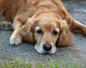 Будка для собаки: как построить быстро и правильно фото