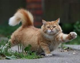 Что делать, если кот метит фото