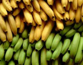 Где растут бананы фото