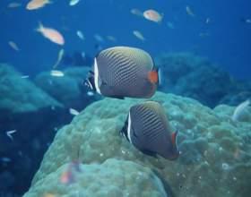 Как будут отмечать всемирный день океанов фото