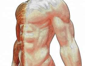 Как быстро увеличить мышечную массу фото