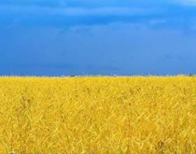 Как быстро выучить украинский фото