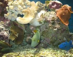 Как чистить грунт в аквариуме фото