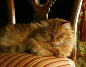 Как искупать кота фото