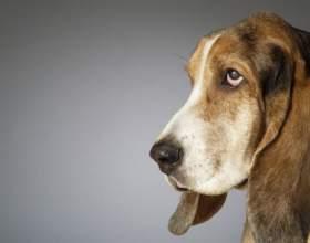 Как избавить собаку от блох фото