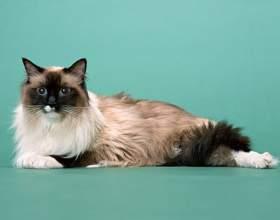 Как избавиться от меток кота фото