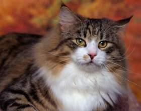 Как избавиться от кошачьих меток фото