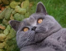 Как кормить стерилизованных кошек фото