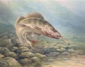 Как ловить рыбу на тюльку фото