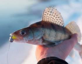 Как ловить судака зимой на тюльку фото