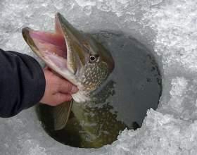 Как ловить рыбу зимой на течении фото