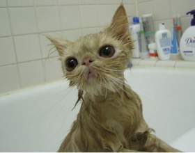 Как мыть кота фото