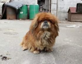 Как найти потерявшуюся собаку фото