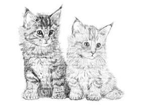 Как нарисовать кошку карандашом фото