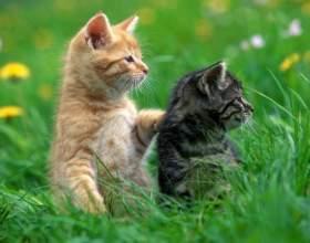 Как нарисовать красивого котенка фото