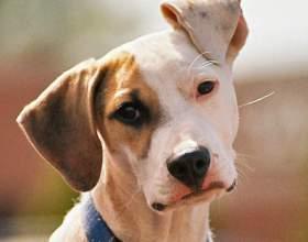 Как научить щенка командам фото