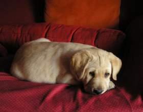 Как научить щенка месту фото