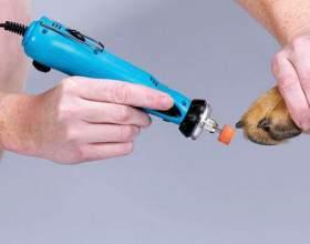 Как обрезать ногти собаке фото